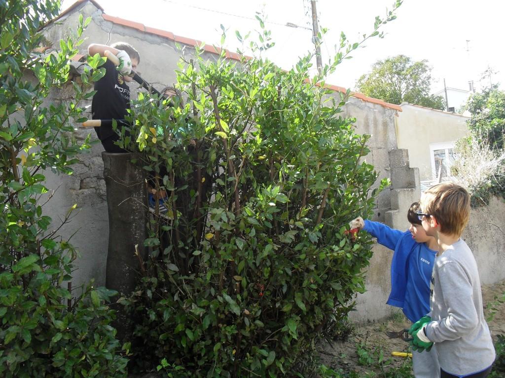 jardinage (5)
